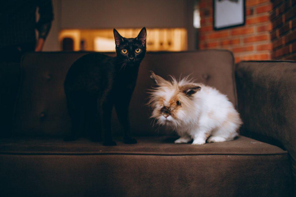 Haustiere Ferienwohnung erlauben